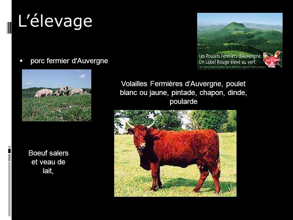 Lélevage porc fermier d Auvergne Volailles Fermières dAuvergne, poulet blanc ou jaune, pintade, chapon, dinde, poularde Boeuf salers et veau de lait,