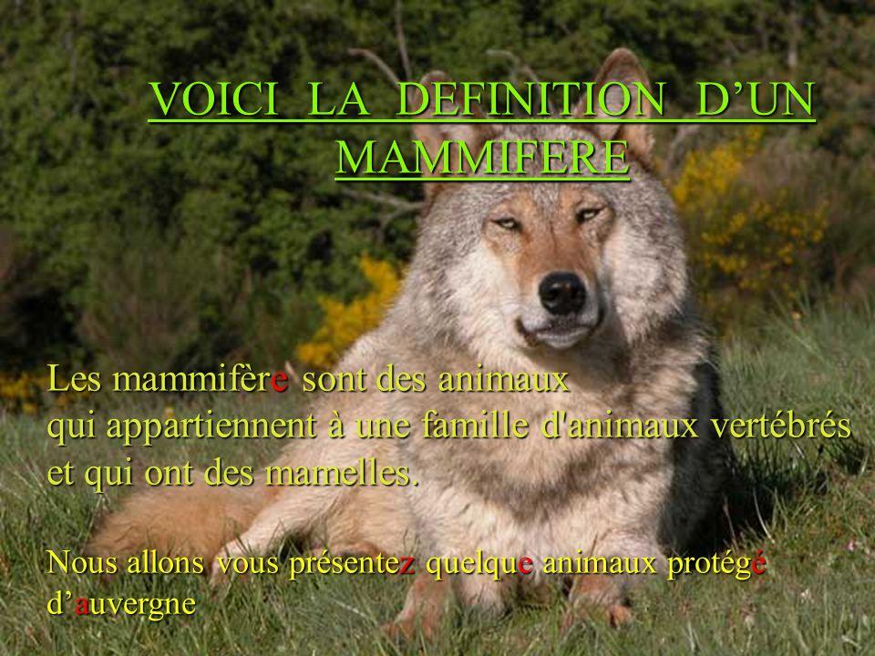 VOICI LA DEFINITION DUN MAMMIFERE Les mammifère sont des animaux qui appartiennent à une famille d'animaux vertébrés et qui ont des mamelles. Nous all