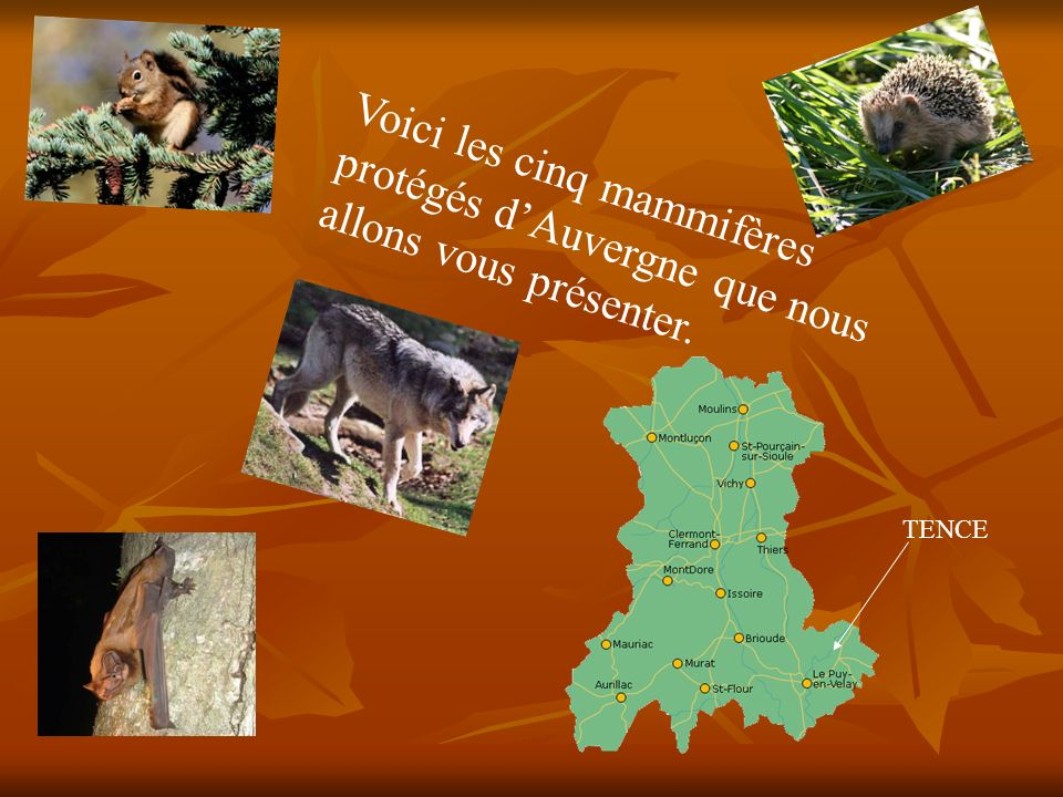 Voici les cinq mammifères protégés dAuvergne que nous allons vous présenter. TENCE