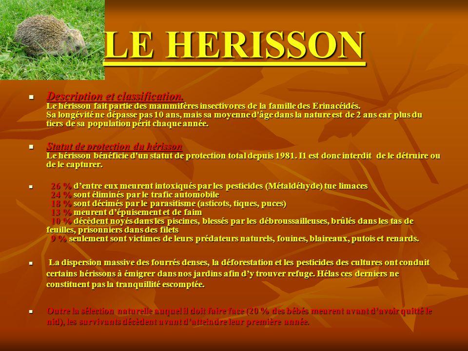 LE HERISSON Description et classification. Le hérisson fait partie des mammifères insectivores de la famille des Erinacéidés. Sa longévité ne dépasse
