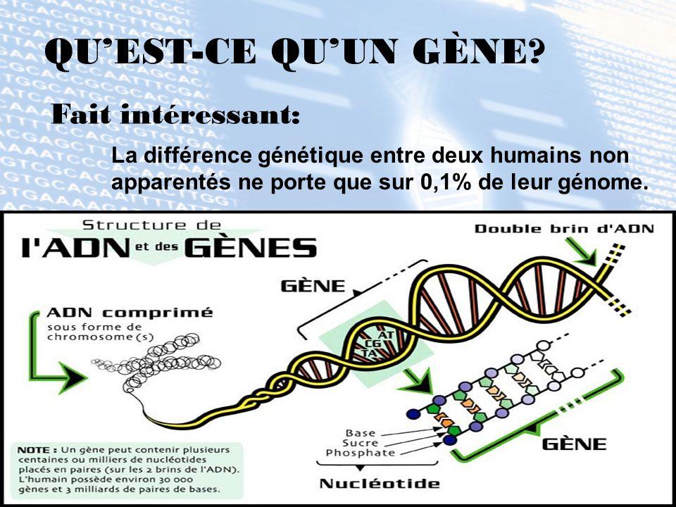 QUEST-CE QUUN GÈNE? La différence génétique entre deux humains non apparentés ne porte que sur 0,1% de leur génome. Fait intéressant: