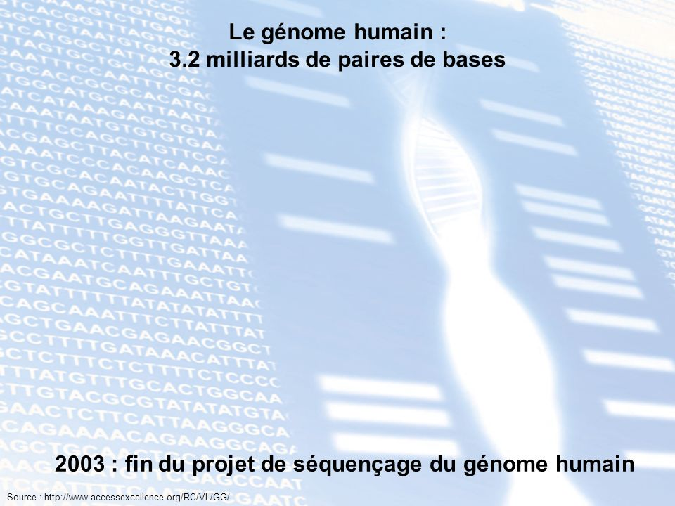 Le génome humain : 3.2 milliards de paires de bases T A C G G C G C A T A T C G T A T A G C A T A T T A C G C G T A G C T A G C G C C C T A G C T A A