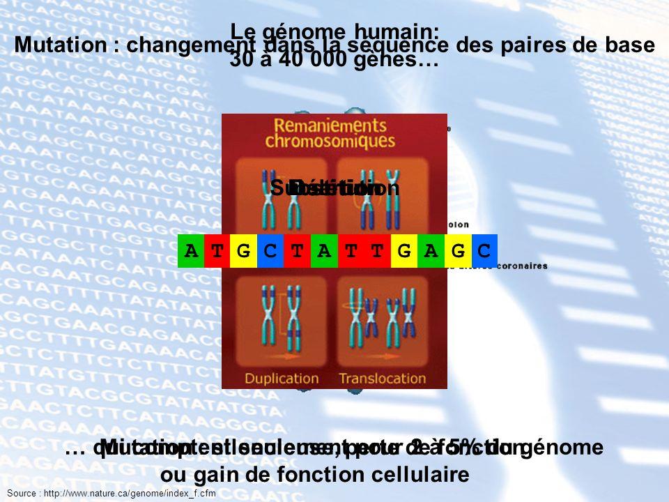 Mutation : changement dans la séquence des paires de base Mutation : silencieuse, perte de fonction ou gain de fonction cellulaire ATGCCATTGCTATG Subs