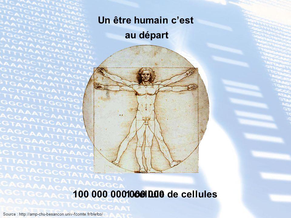 Un être humain cest 100 000 000 000 000 de cellules Source : http://amp-chu-besancon.univ-fcomte.fr/blefco/ 1 cellule au départ