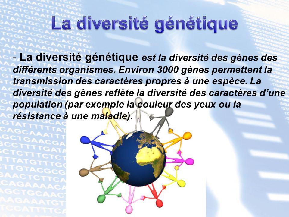 - La diversité génétique est la diversité des gènes des différents organismes. Environ 3000 gènes permettent la transmission des caractères propres à