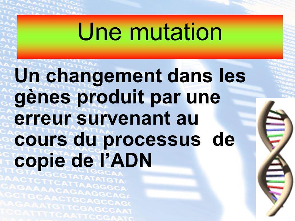Un changement dans les gènes produit par une erreur survenant au cours du processus de copie de lADN Une mutation