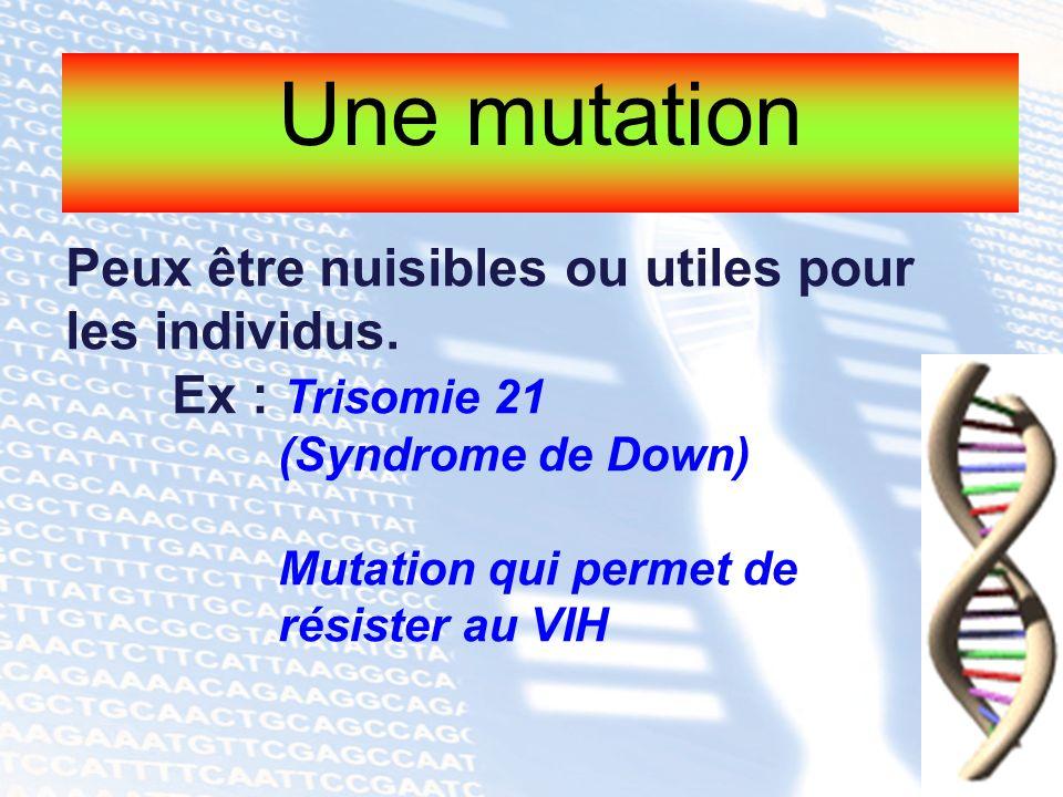 Une mutation Peux être nuisibles ou utiles pour les individus. Ex : Trisomie 21 (Syndrome de Down) Mutation qui permet de résister au VIH