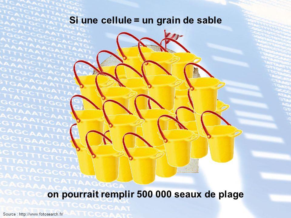 Si une cellule = un grain de sable on pourrait remplir 500 000 seaux de plage Source : http://www.fotosearch.fr/