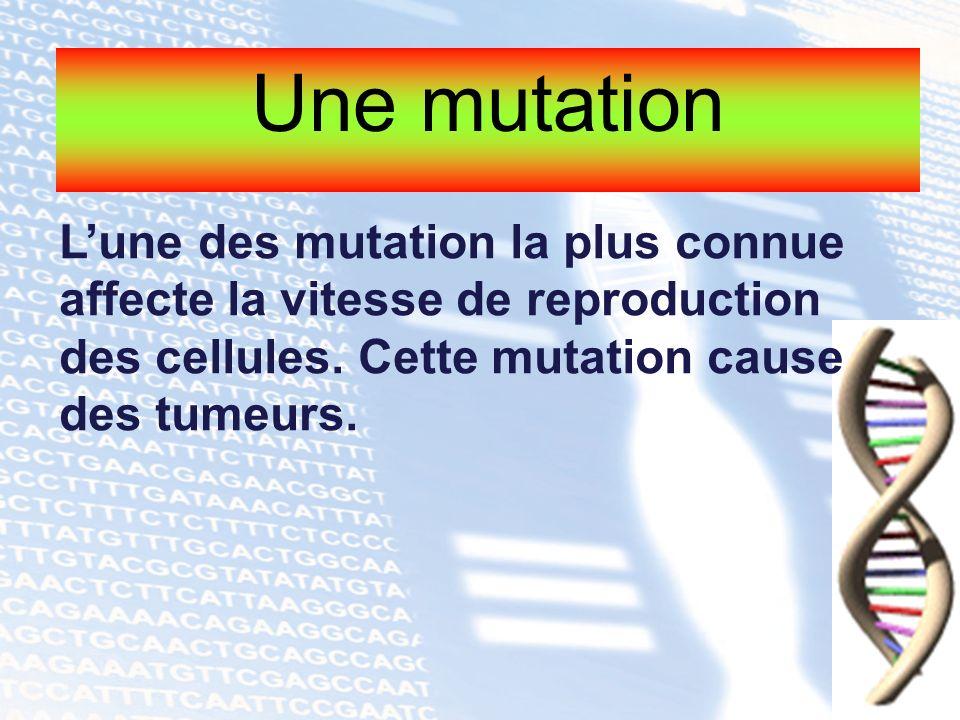 Une mutation Lune des mutation la plus connue affecte la vitesse de reproduction des cellules. Cette mutation cause des tumeurs.