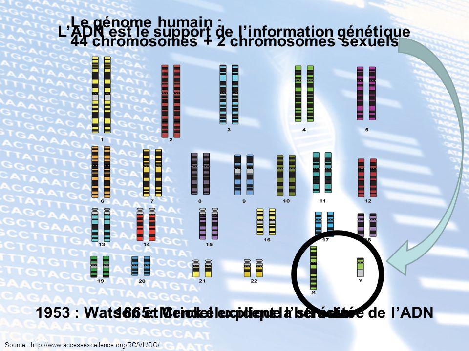 1953 : Watson et Crick élucident la structure de lADN Le génome humain : 44 chromosomes + 2 chromosomes sexuels 1865: Mendel explique lhérédité LADN e