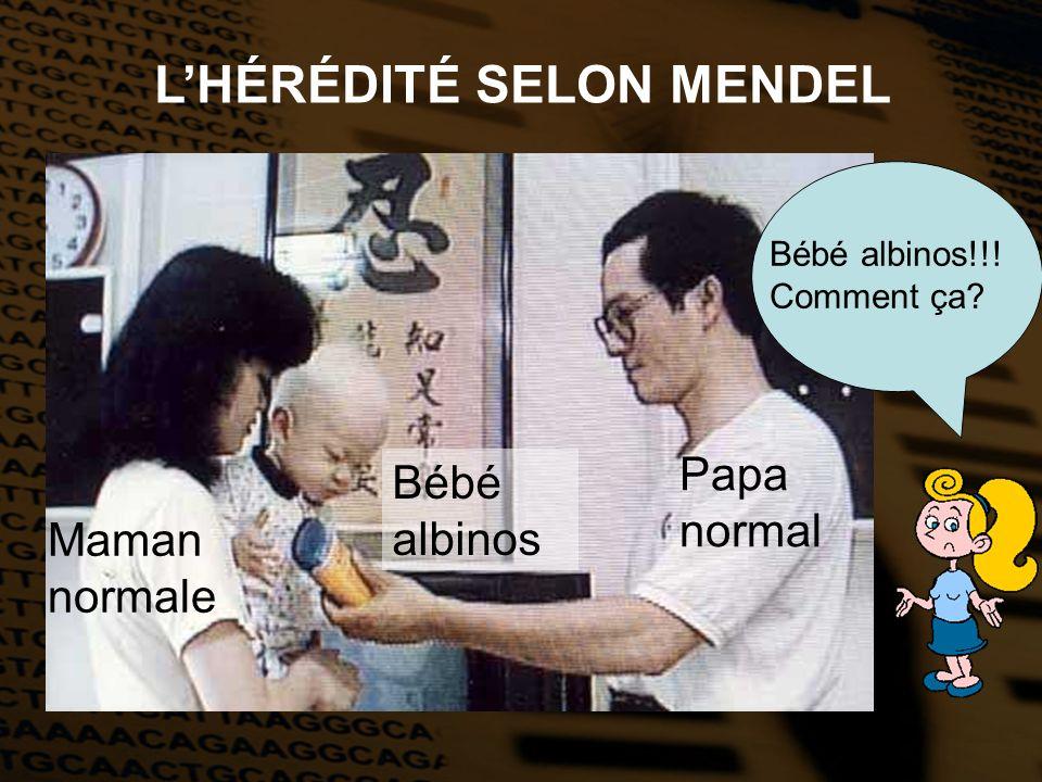 LHÉRÉDITÉ SELON MENDEL Bébé albinos!!! Comment ça? Maman normale Papa normal Bébé albinos
