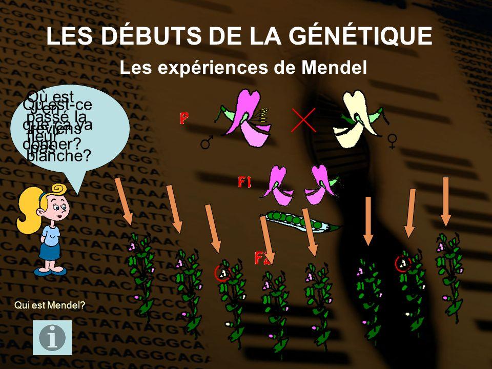 LES DÉBUTS DE LA GÉNÉTIQUE Les expériences de Mendel Qui est Mendel? Quest-ce que ça va donner? Où est passé la fleur blanche? Jen reviens pas