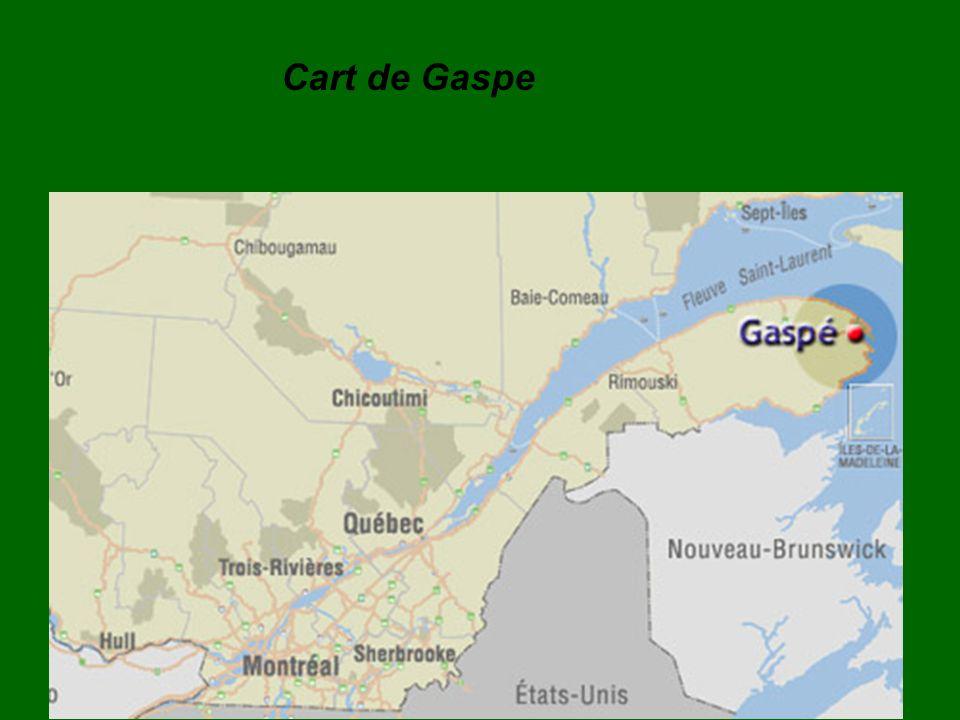 La forêt de Gaspé est très très, très importante à Gaspé.