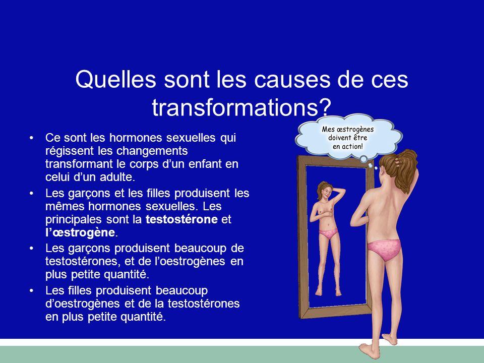 Quelles sont les causes de ces transformations? Ce sont les hormones sexuelles qui régissent les changements transformant le corps dun enfant en celui