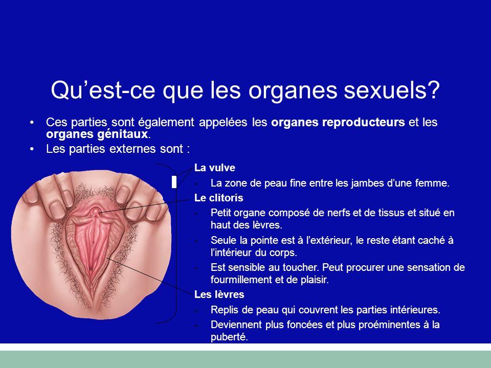 Ces parties sont également appelées les organes reproducteurs et les organes génitaux. Les parties externes sont : La vulve -La zone de peau fine entr