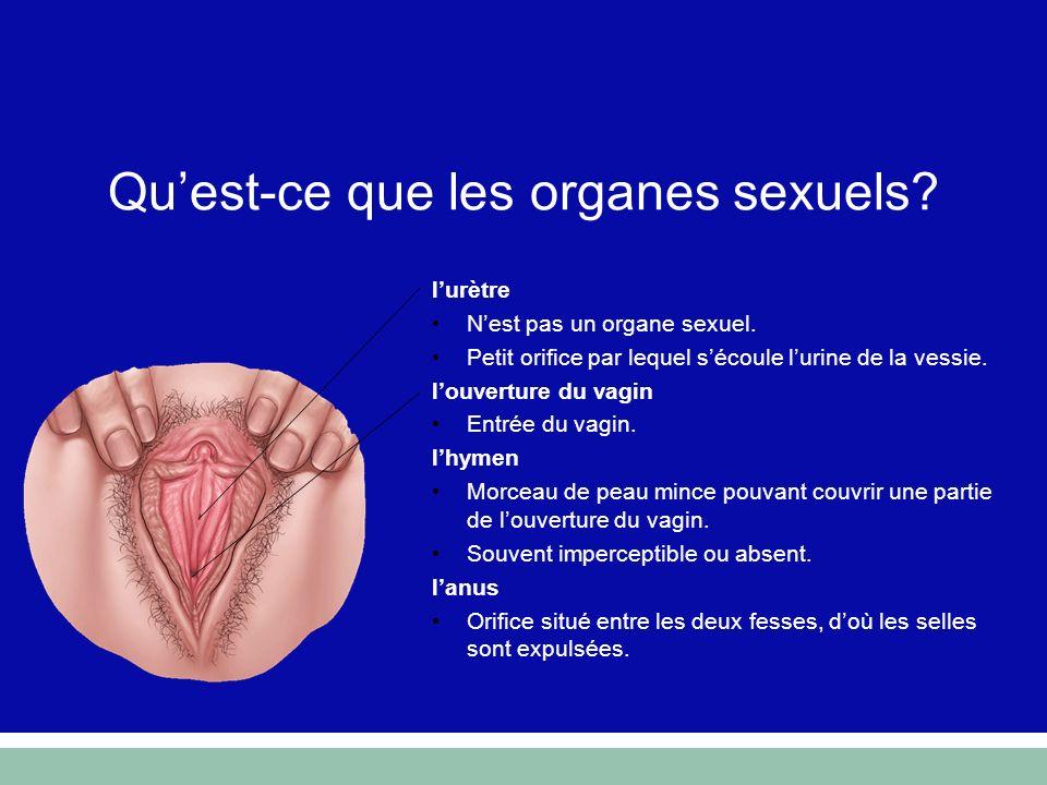 lurètre Nest pas un organe sexuel. Petit orifice par lequel sécoule lurine de la vessie. louverture du vagin Entrée du vagin. lhymen Morceau de peau m