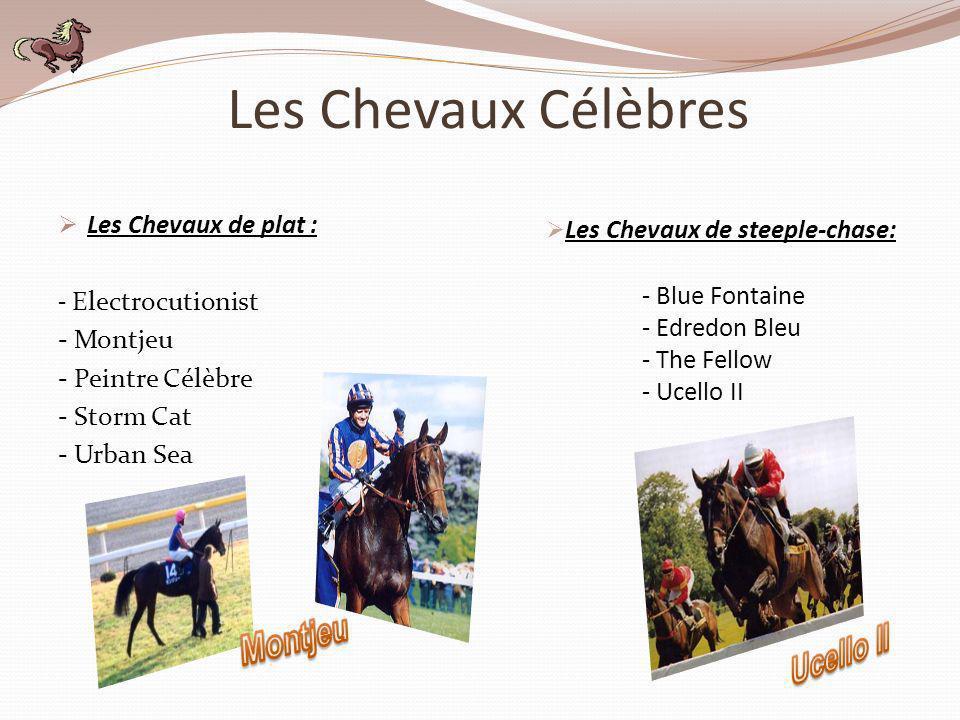 Les Chevaux Célèbres Les Chevaux de plat : - Electrocutionist - Montjeu - Peintre Célèbre - Storm Cat - Urban Sea - Blue Fontaine - Edredon Bleu - The