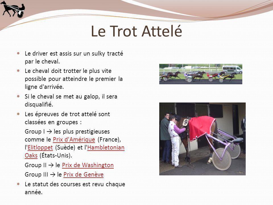 Le Trot Attelé Le driver est assis sur un sulky tracté par le cheval. Le cheval doit trotter le plus vite possible pour atteindre le premier la ligne