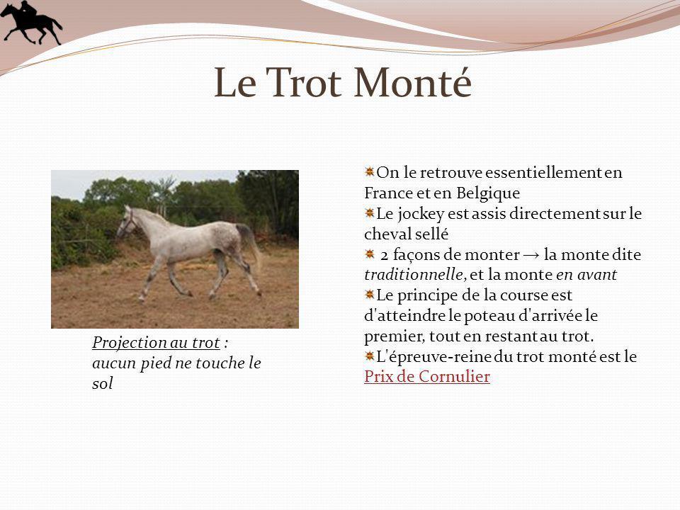 Le Trot Monté On le retrouve essentiellement en France et en Belgique Le jockey est assis directement sur le cheval sellé 2 façons de monter la monte