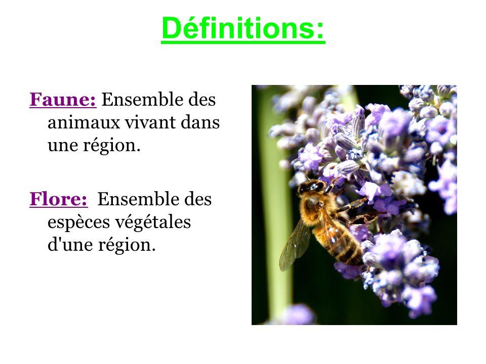 Définitions: Faune: Ensemble des animaux vivant dans une région. Flore: Ensemble des espèces végétales d'une région.