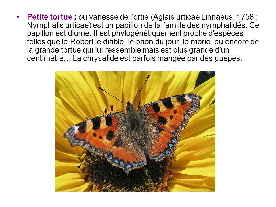 Petite tortue : ou vanesse de l'ortie (Aglais urticae Linnaeus, 1758 ; Nymphalis urticae) est un papillon de la famille des nymphalidés. Ce papillon e