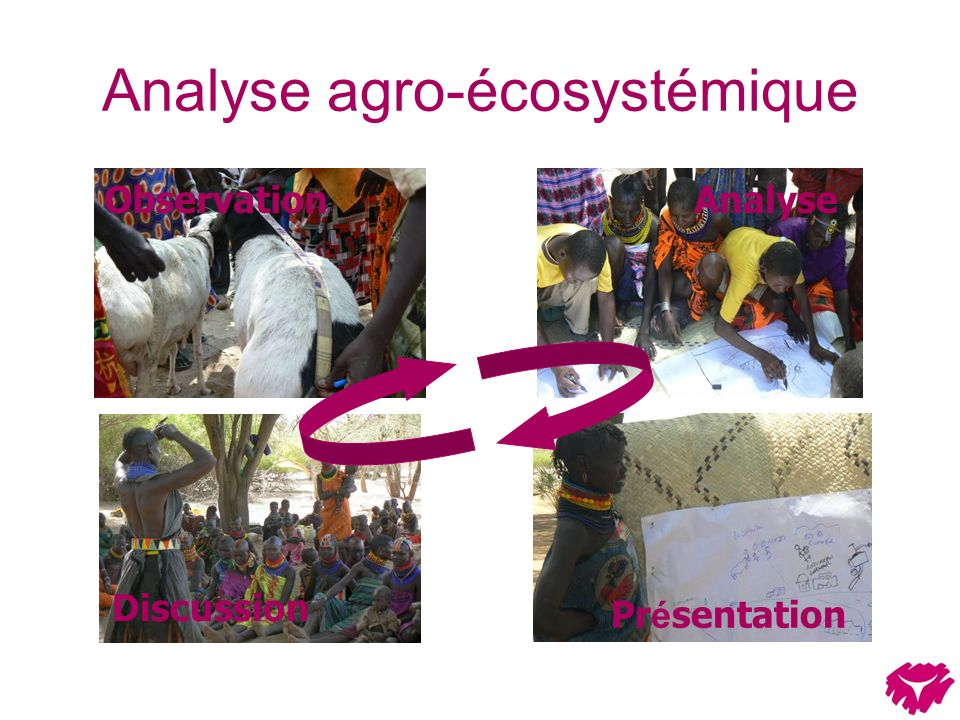 Analyse agro-écosystémique ObservationAnalyse Discussion Pr é sentation