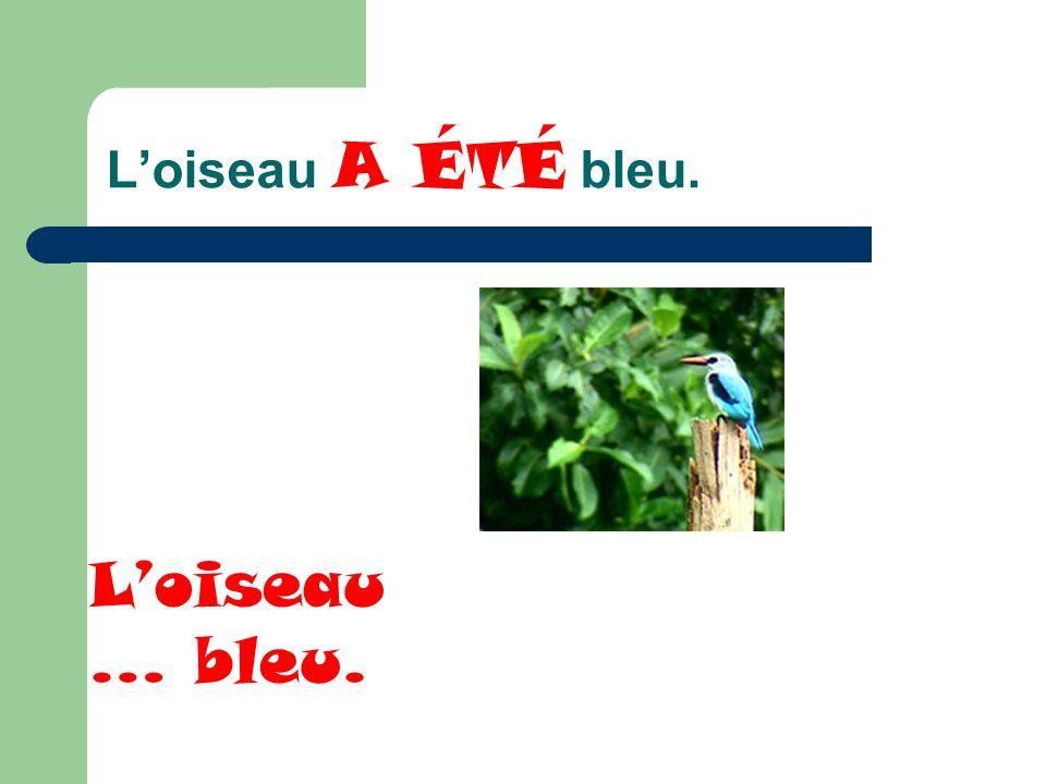 Loiseau A ÉTÉ bleu. Loiseau … bleu.