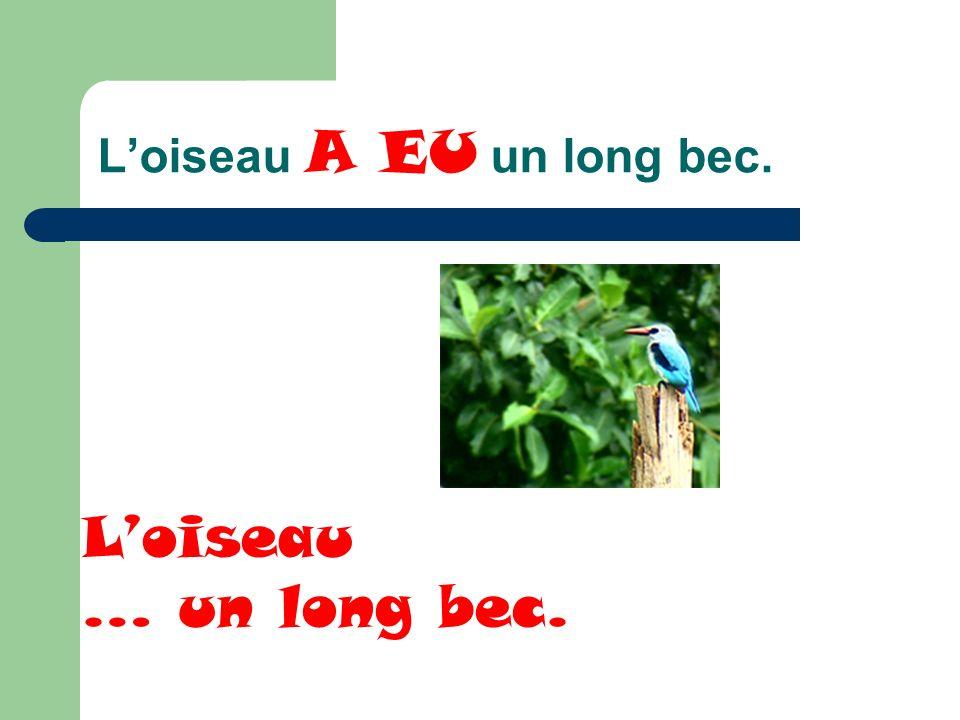 Loiseau A EU un long bec. Loiseau … un long bec.
