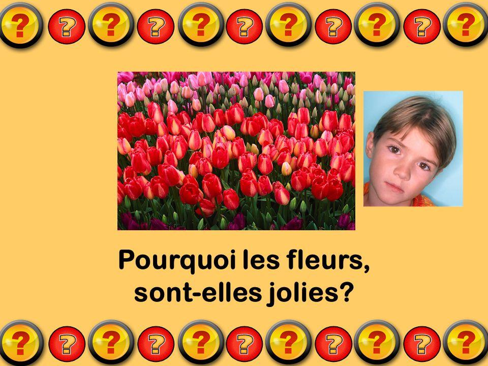 Pourquoi les fleurs, sont-elles jolies?