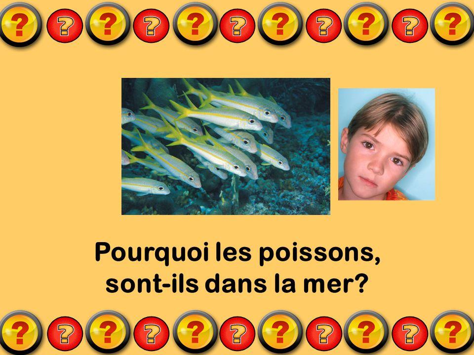 Pourquoi les poissons, sont-ils dans la mer?