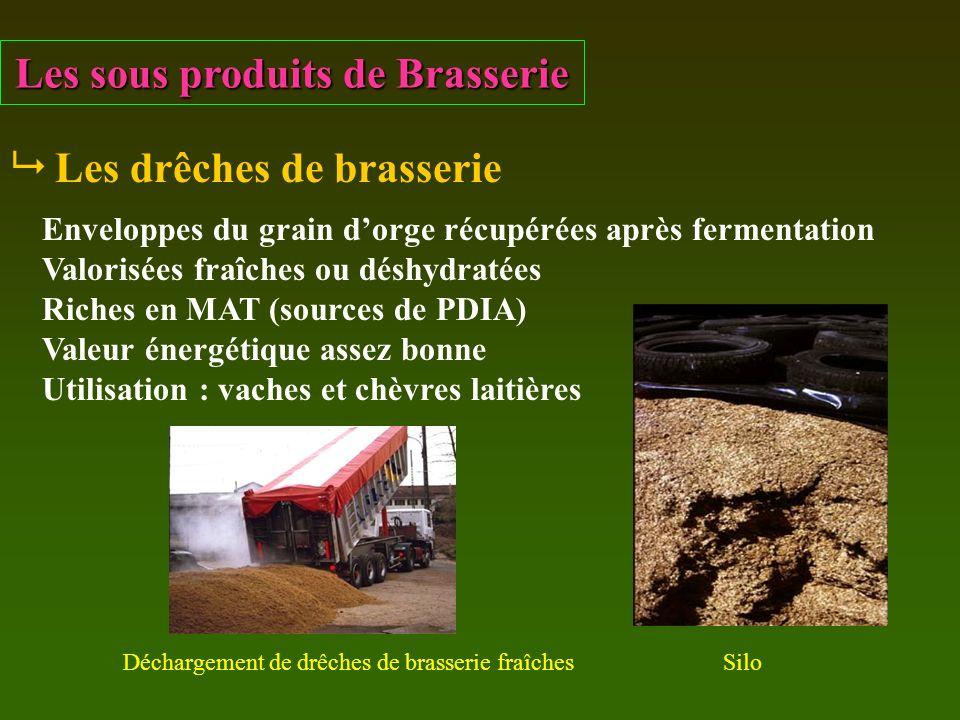 Les sous produits de Brasserie Les drêches de brasserie Enveloppes du grain dorge récupérées après fermentation Valorisées fraîches ou déshydratées Ri
