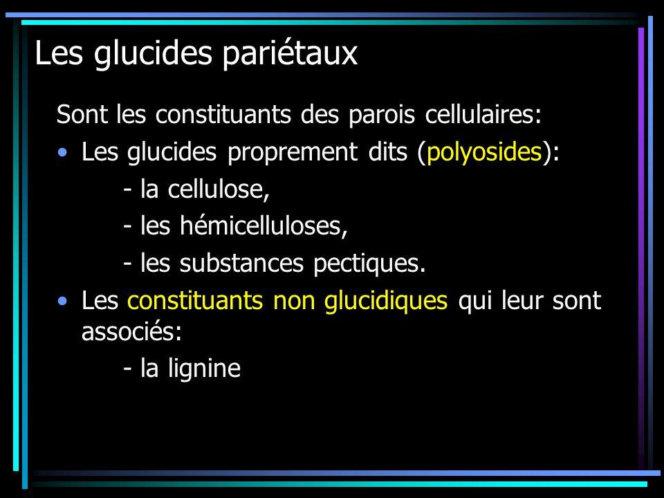 Les glucides pariétaux Sont les constituants des parois cellulaires: Les glucides proprement dits (polyosides): - la cellulose, - les hémicelluloses,