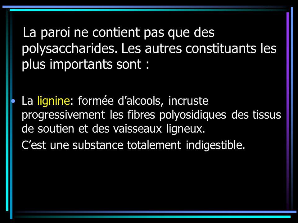 La paroi ne contient pas que des polysaccharides. Les autres constituants les plus importants sont : La lignine: formée dalcools, incruste progressive