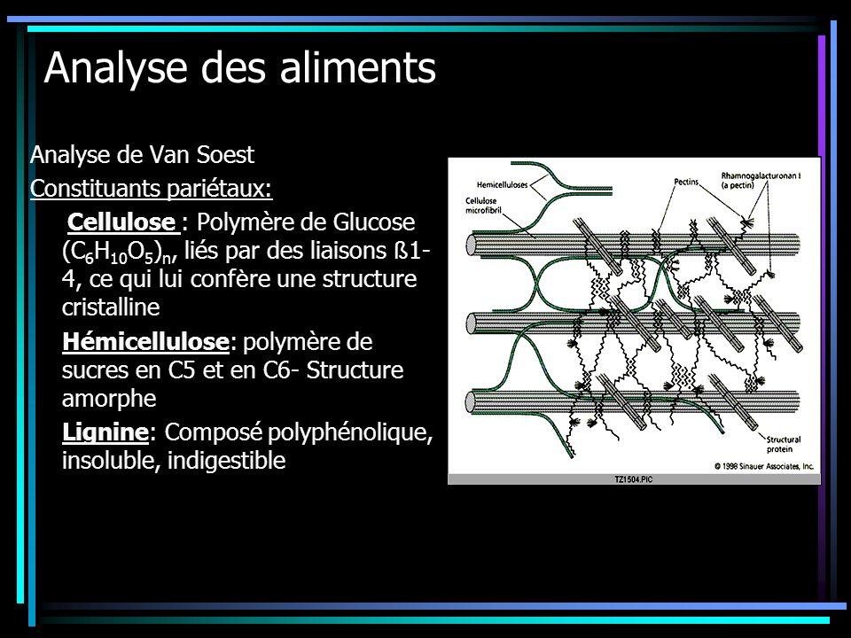 Analyse des aliments Analyse de Van Soest Constituants pariétaux: Cellulose : Polymère de Glucose (C 6 H 10 O 5 ) n, liés par des liaisons ß 1- 4, ce