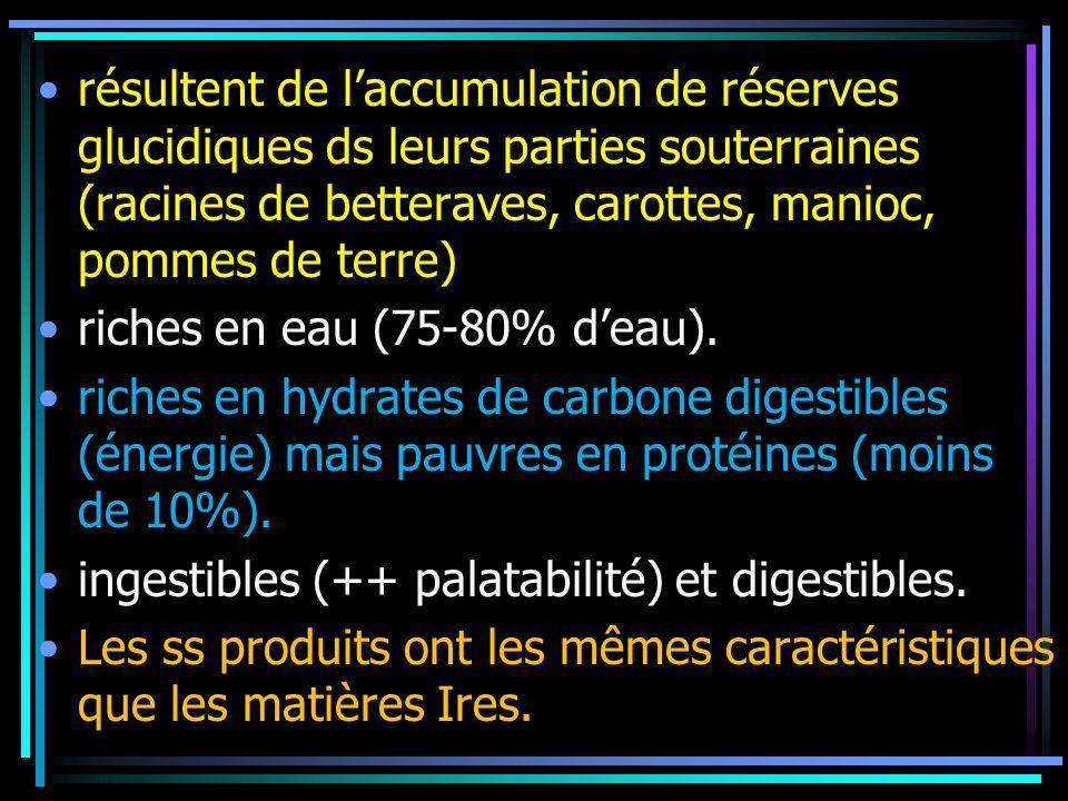 résultent de laccumulation de réserves glucidiques ds leurs parties souterraines (racines de betteraves, carottes, manioc, pommes de terre) riches en