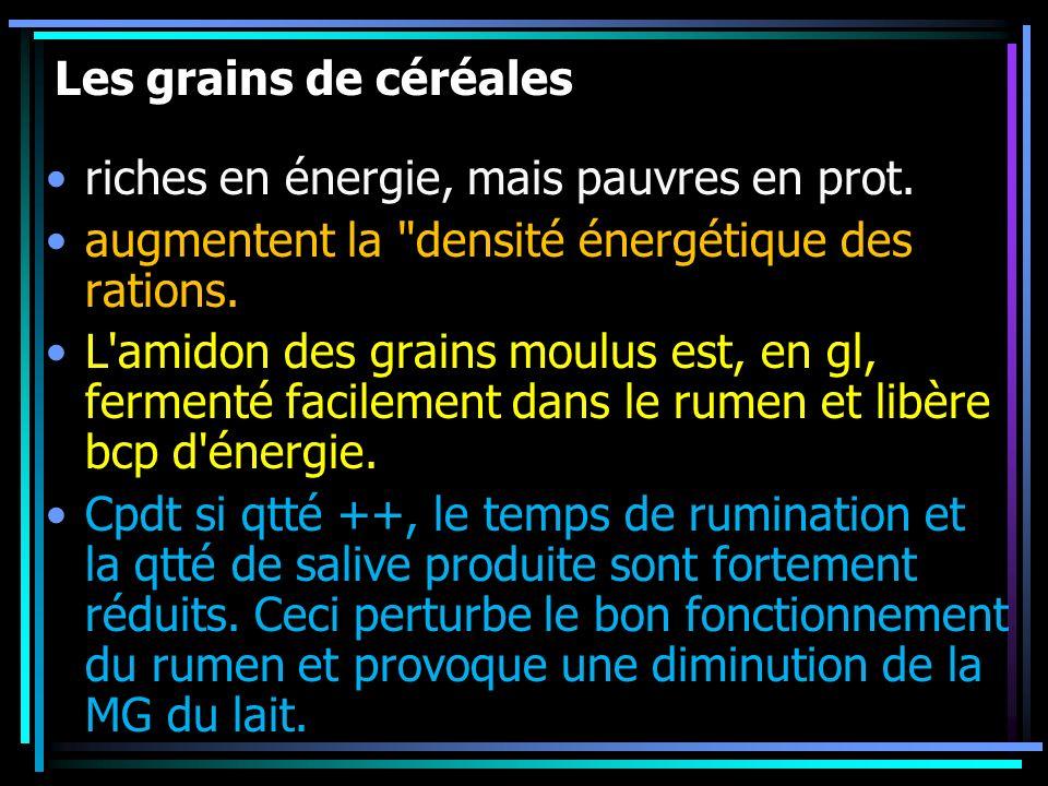 Les grains de céréales riches en énergie, mais pauvres en prot. augmentent la