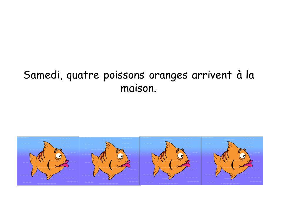 Samedi, quatre poissons oranges arrivent à la maison.