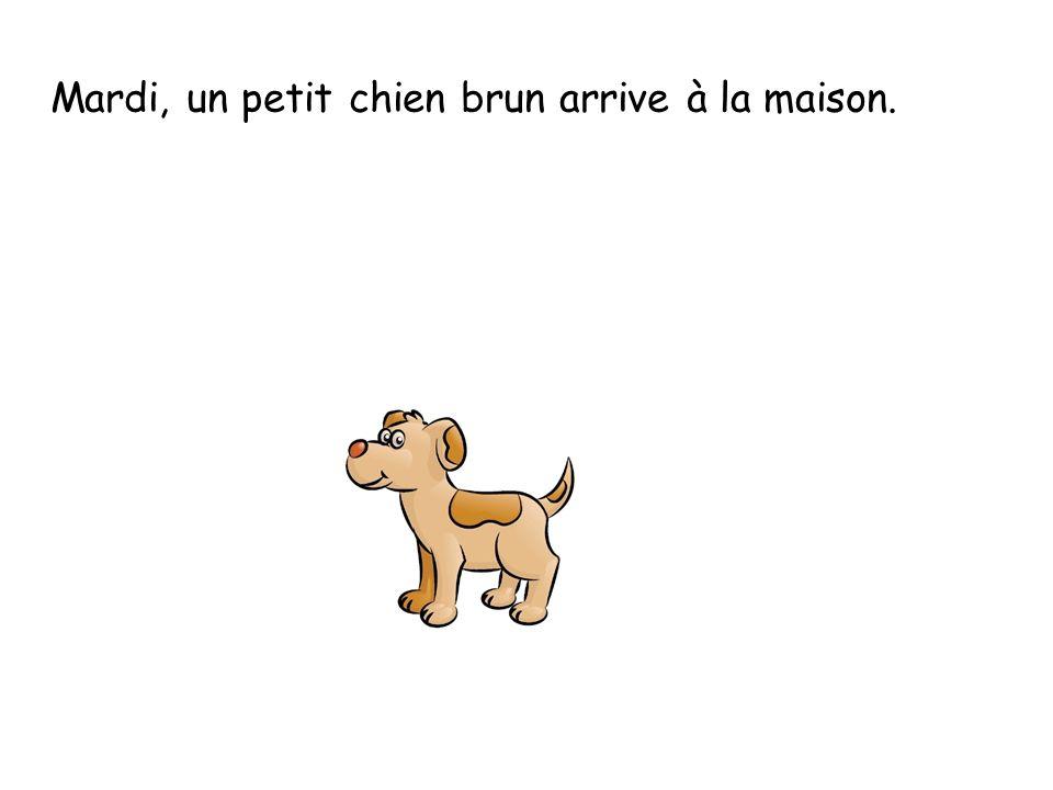 Mardi, un petit chien brun arrive à la maison.