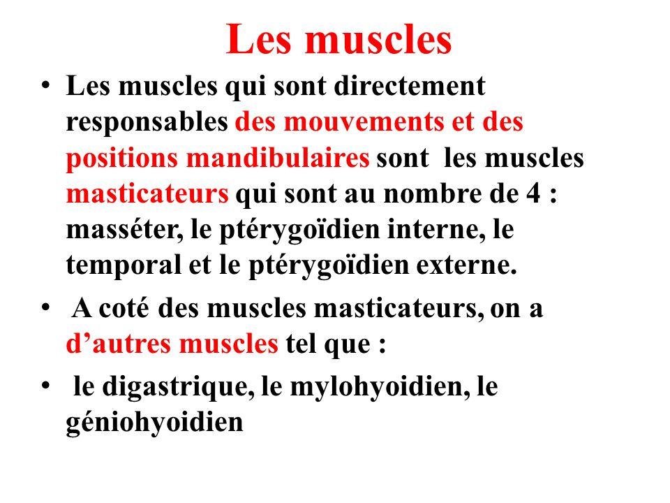 Les muscles Les muscles qui sont directement responsables des mouvements et des positions mandibulaires sont les muscles masticateurs qui sont au nomb
