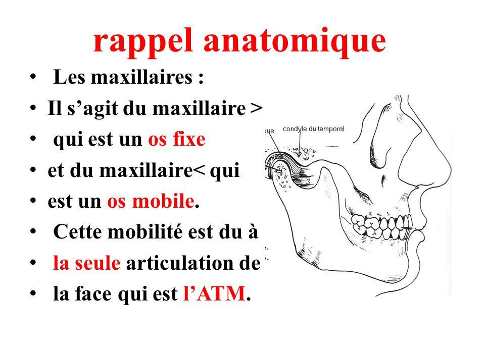 rappel anatomique Les maxillaires : Il sagit du maxillaire > qui est un os fixe et du maxillaire< qui est un os mobile. Cette mobilité est du à la seu