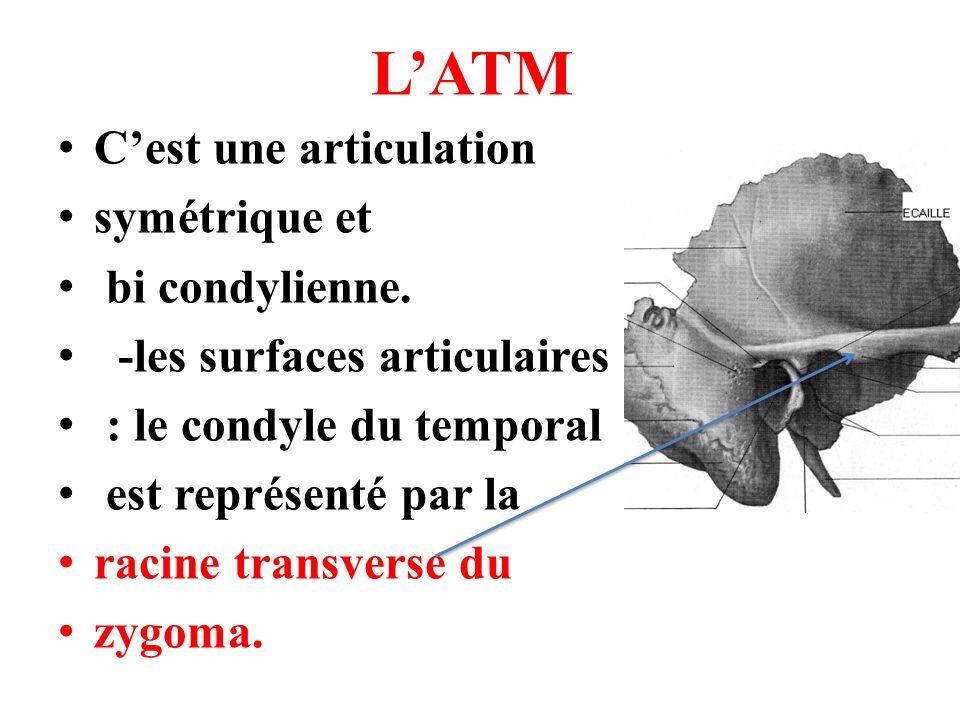 le condyle -au maxillaire < : le condyle forme une saillie proéminente surmontant une partie rétrécie appelée col du condyle.