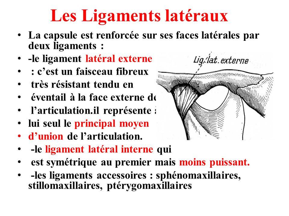 Les Ligaments latéraux La capsule est renforcée sur ses faces latérales par deux ligaments : -le ligament latéral externe : cest un faisceau fibreux t