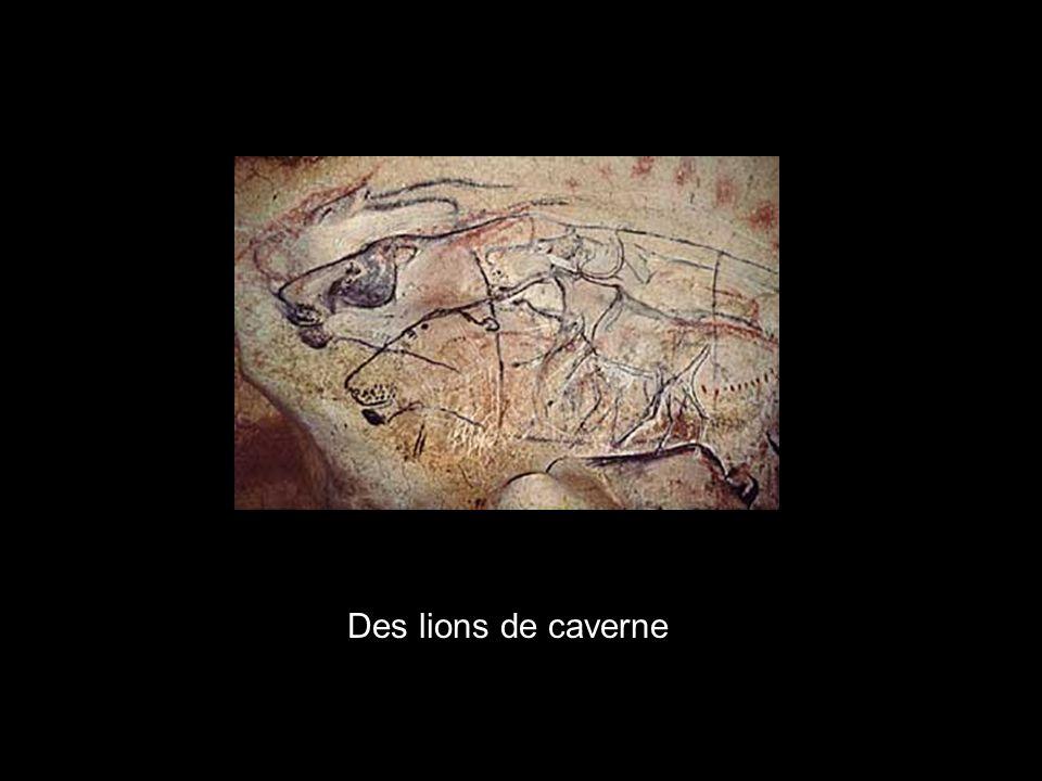 Trois lions de caverne x