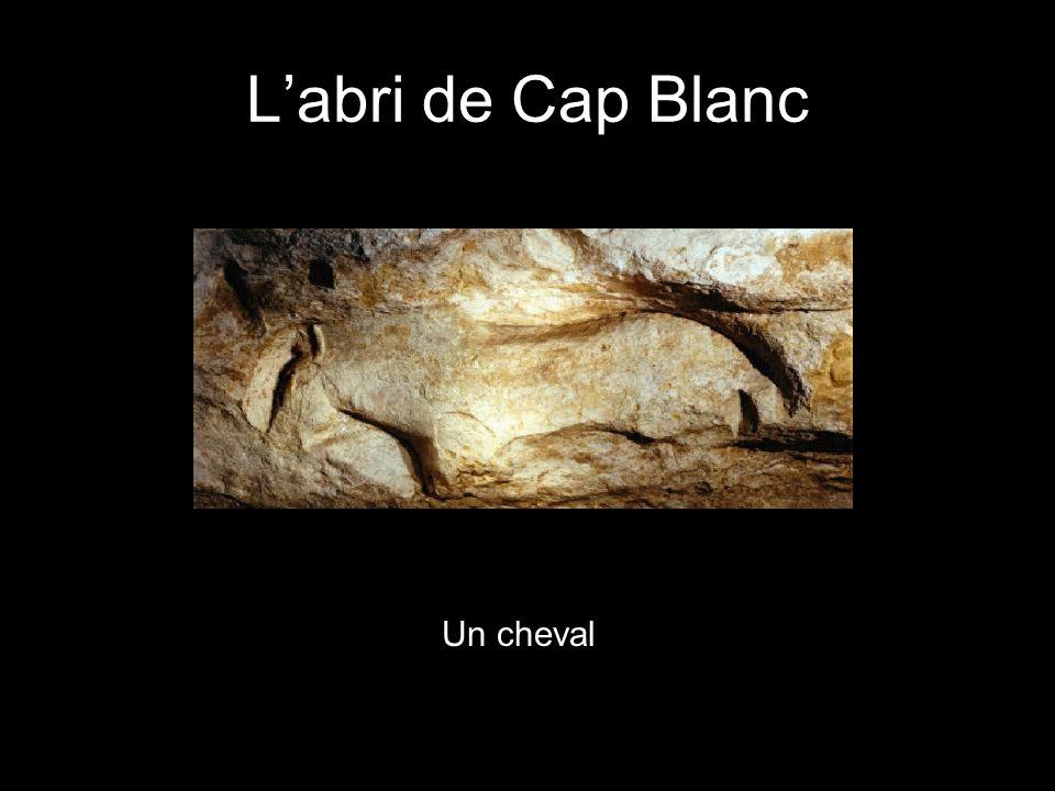 Un cheval Labri de Cap Blanc