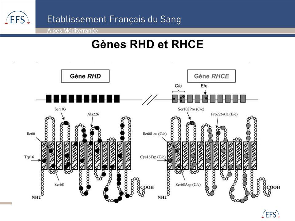 Alpes Méditerranée Gènes RHD et RHCE