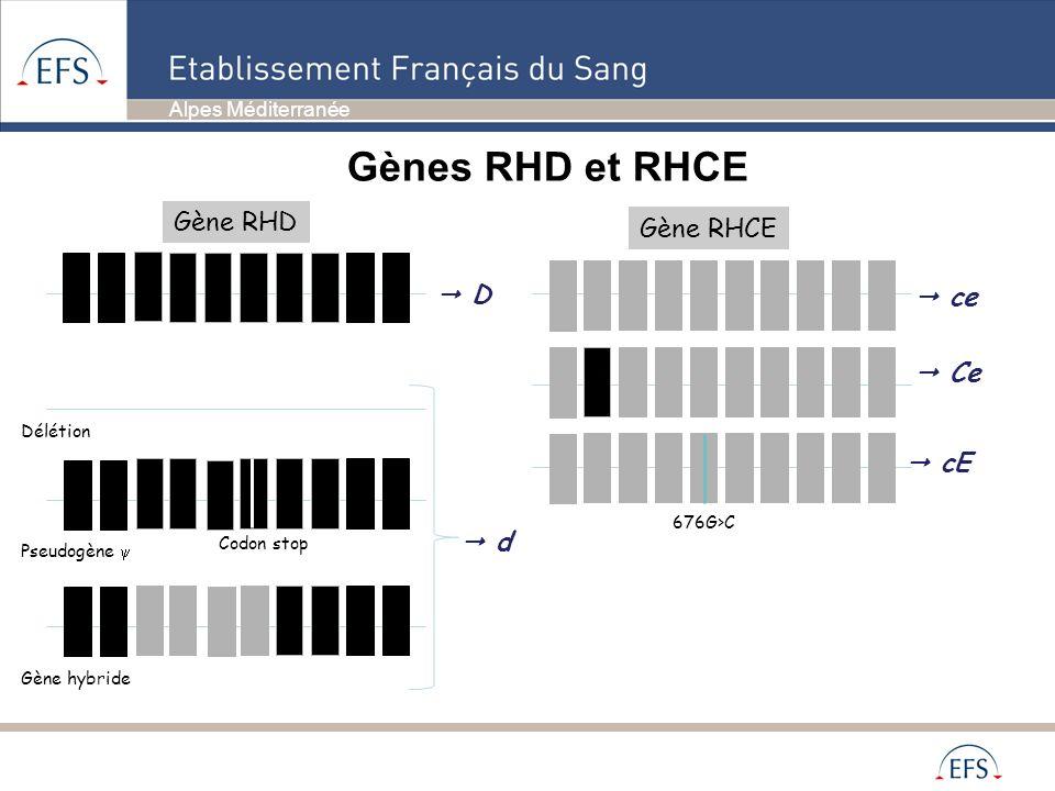 Alpes Méditerranée Gène RHD D Gène RHCE cE Ce ce 676G>C d Gènes RHD et RHCE Codon stop Pseudogène Gène hybride Délétion