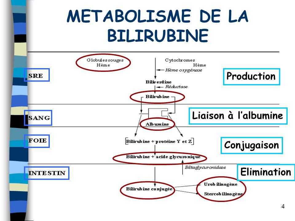 4 METABOLISME DE LA BILIRUBINE Production Liaison à lalbumine Conjugaison Elimination