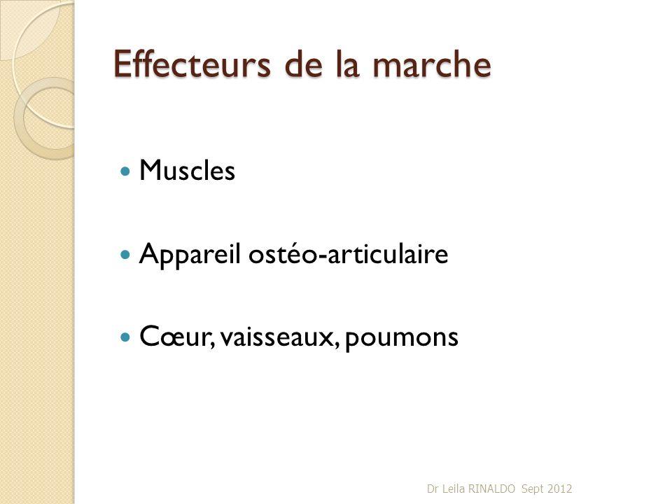 Effecteurs de la marche Muscles Appareil ostéo-articulaire Cœur, vaisseaux, poumons Dr Leila RINALDO Sept 2012