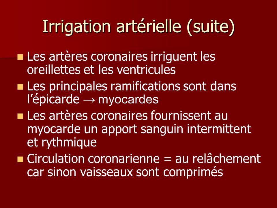 Irrigation artérielle (suite) Les artères coronaires irriguent les oreillettes et les ventricules Les principales ramifications sont dans lépicarde my