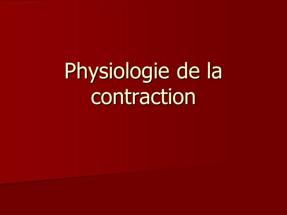Physiologie de la contraction